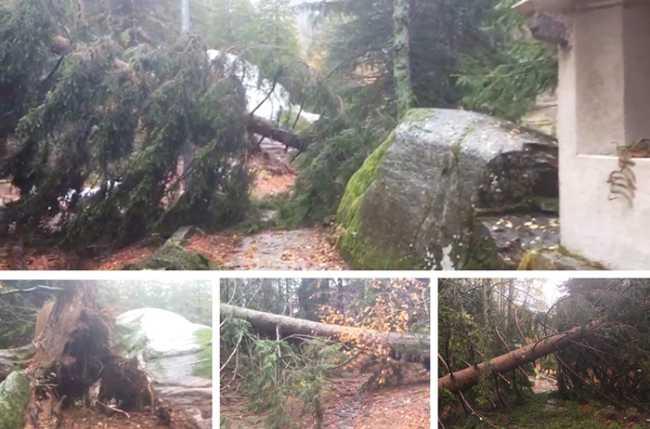 antillone alberi caduti mix