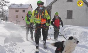 cane neve devero