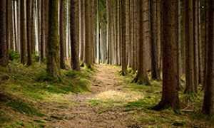 corta sentiero bosco