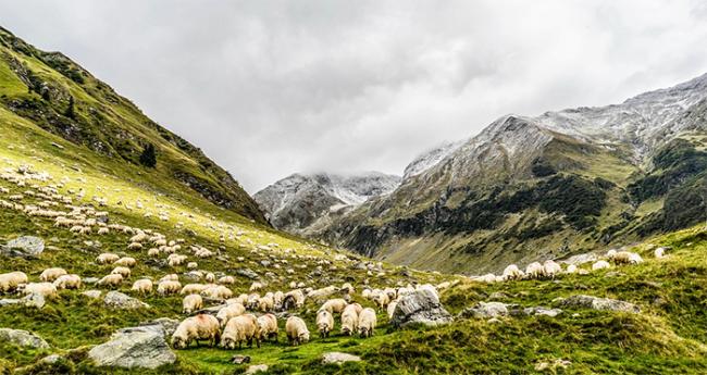 montagna nuvole pecore