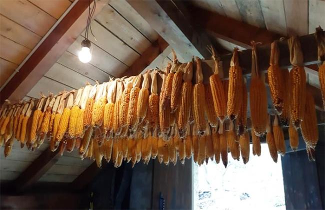 pannocchie anzasca polenta