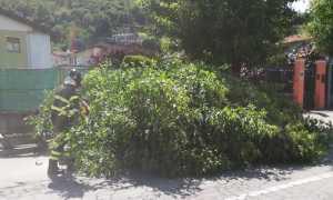 albero tangenziale vvf