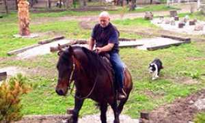 b cavallo premosello