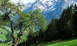 b montagna panorama albero