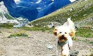 corta cane montagna