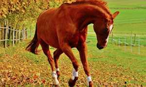 corta cavallo imbizzarrito