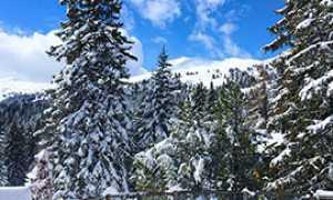 corta montagna neve