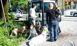 corta soccorso cani