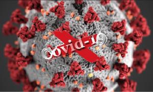 covid 19 vero virus